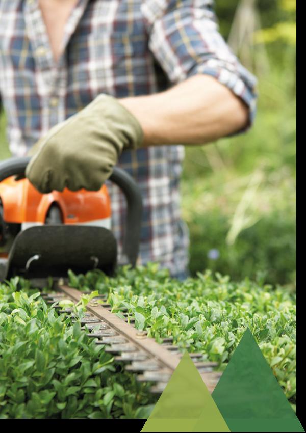 Garten- und Landschaftsbau Gartenpflege Hecke